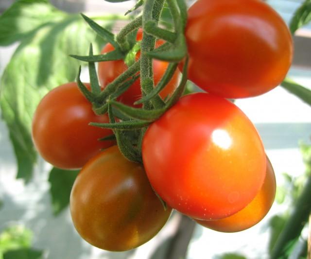 ベランダの野菜 006