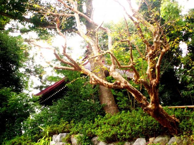片平村を歩く 018