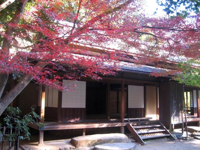 秋の三景園20131203 164