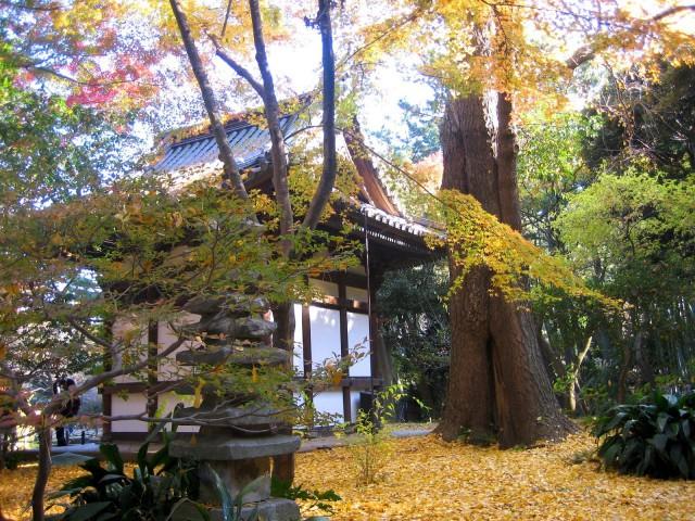秋の三景園20131203 092