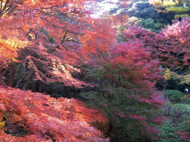 秋の三景園20131203 118
