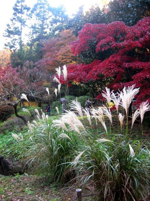 秋の三景園20131203 181