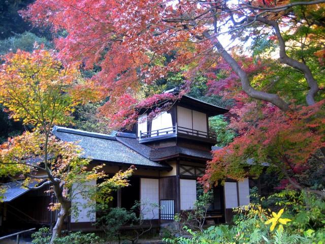 秋の三景園20131203 180