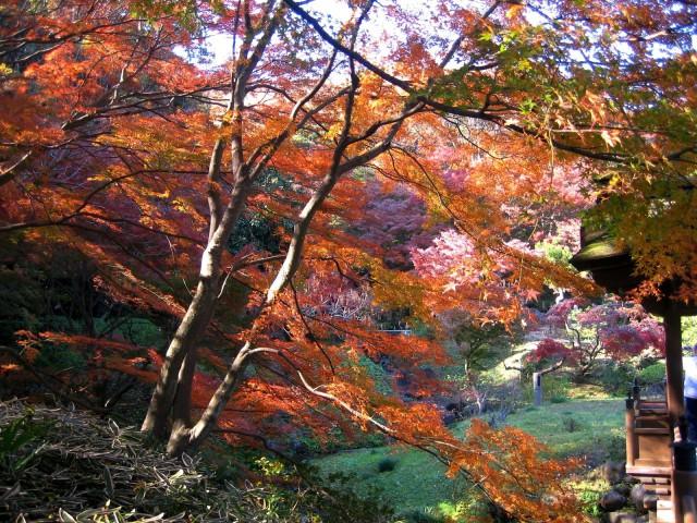 秋の三景園20131203 106