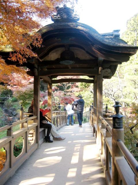秋の三景園20131203 116