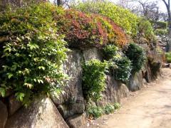 羽根木公園・豪徳寺 088
