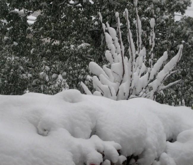 雪の庭③ 004 - コピー