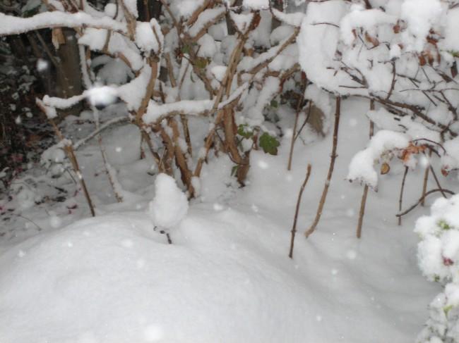 雪の庭③ 001