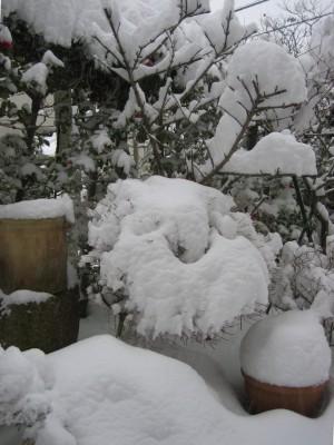 雪の庭② 004